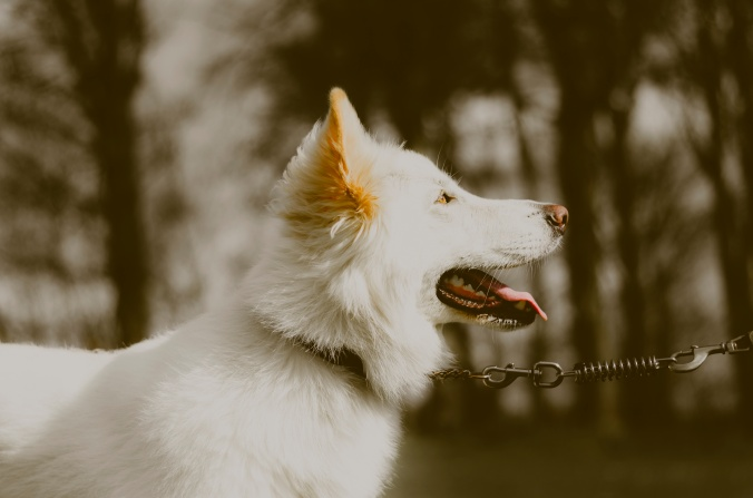 westside-dog